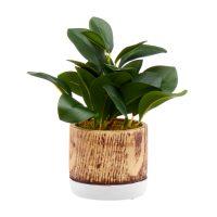 Green Faux Plant in Wooden Pot